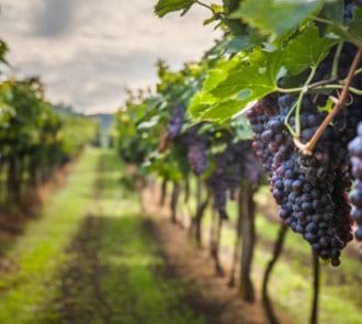 máster en enología y maridaje de vinos